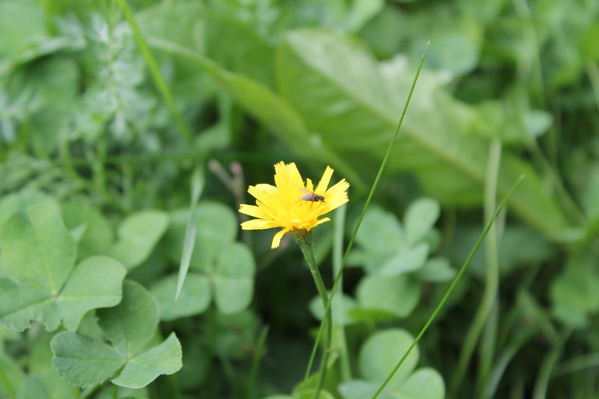 Frühsommer Biohotel Gelbe Blume