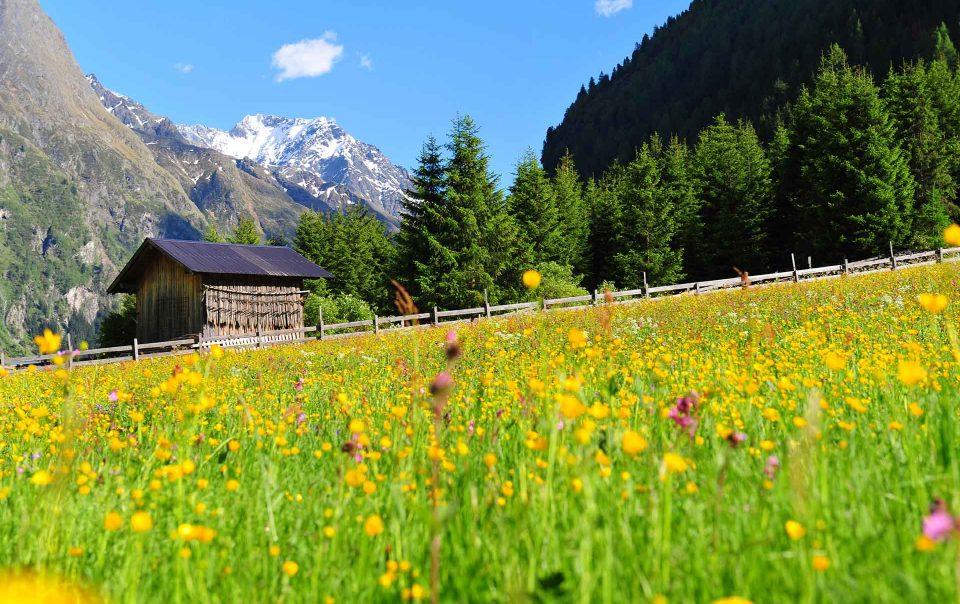 Berge mit Blumenwiese